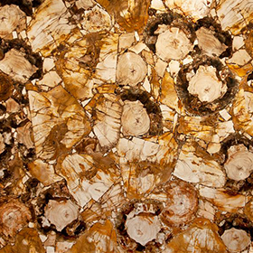 Petrified Wood Yellow